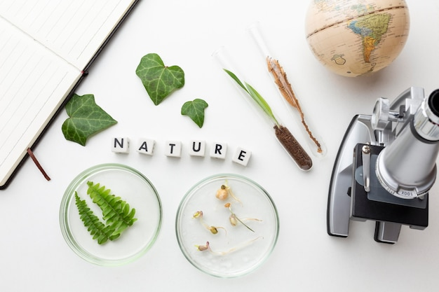 Powyżej widać rośliny i szkło