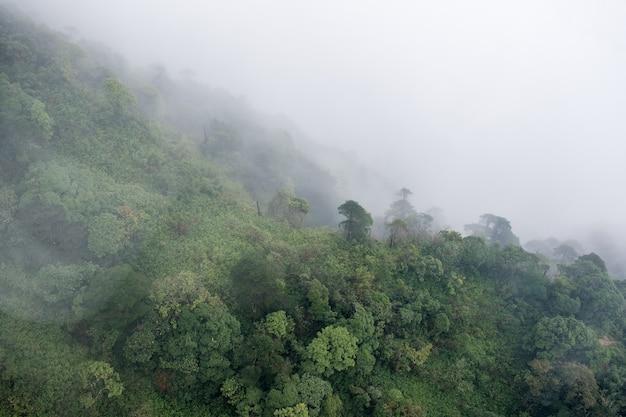 Powyżej widok na tropikalny las deszczowy w mglisty dzień