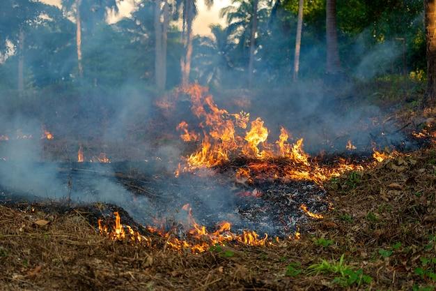 Pożar krzewów w tropikalnym lesie na wyspie koh phangan, tajlandia
