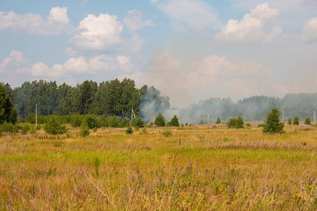 Pożar lasu na polu. klęska żywiołowa