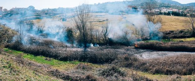 Pożar w lesie w popołudniowym lesie albańskim płonie