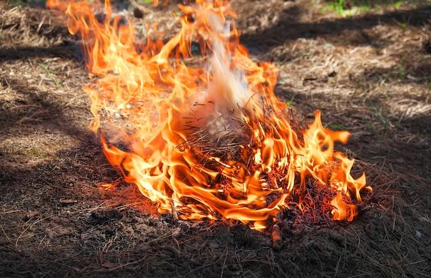 Pożar w lesie wykonany przez kogoś. płomień na piknik na wiosnę