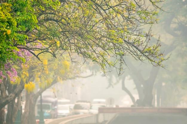 Pożary amazońskich lasów deszczowych rozprzestrzeniły dym, który spadł na miasto w brazylii