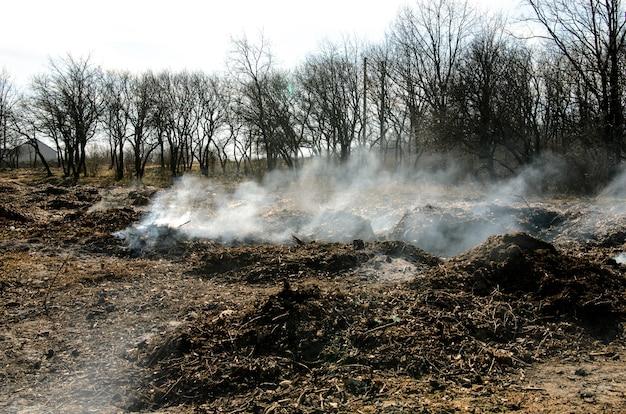 Pożary lasów i dym