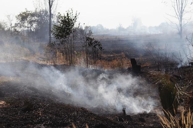 Pożary lasów płoną wiosną las