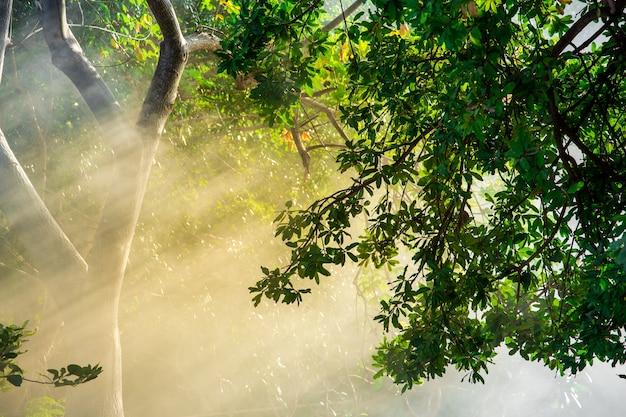 Późne letnie słońce przedzierające się przez drzewa