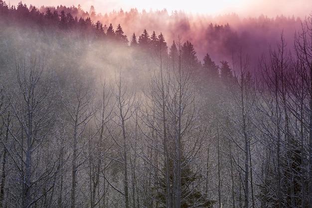 Późnojesienne krajobrazy. drzewa pokryte szronem o wschodzie słońca.