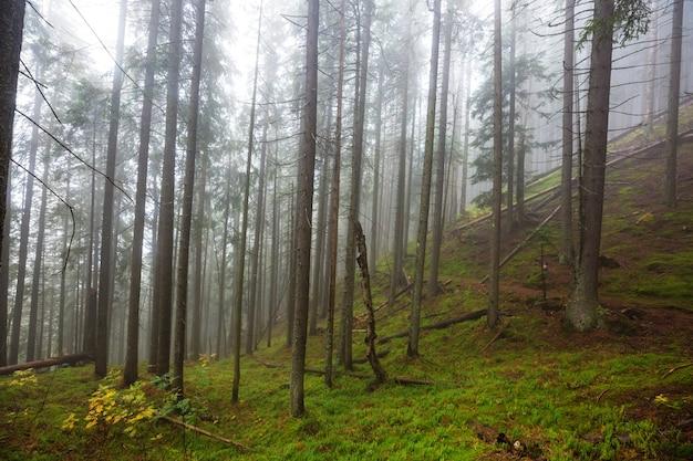 Późnojesienne krajobrazy. mglisty las o poranku