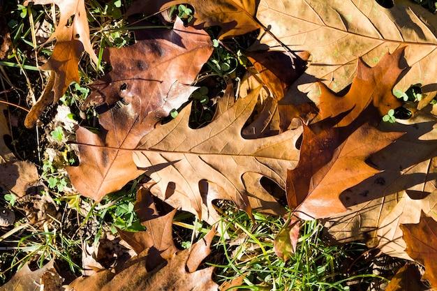 Pożółkłe drzewa z opadłymi liśćmi i leży na koronach drzew w jesiennym parku, słoneczny dzień