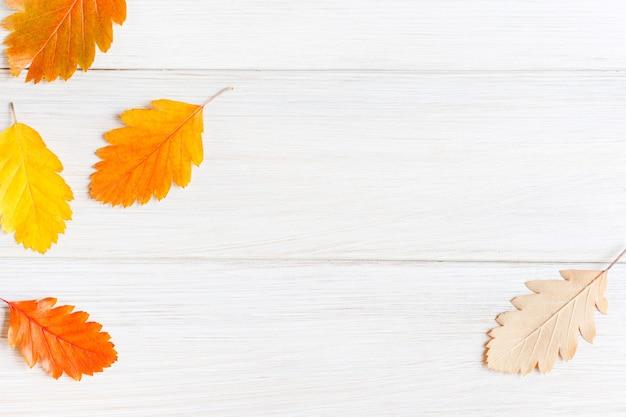 Pożółkłe liście jarzębiny na jasnym białym drewnianym stole minimalistyczne jesienne tło dla sezonowego projektowania pocztówek układy plakatów kopiowanie miejsca