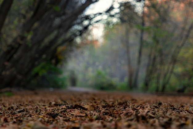 Pożółkłe liście leżą na ziemi. tło jest rozmyte. zdjęcie zrobione w lesie.