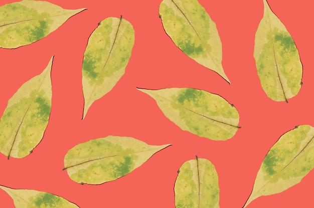 Pożółkłe suche liście na czerwonym tle. jesienny wzór suszonych liści