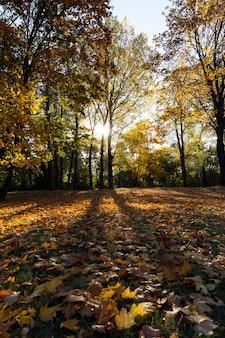Pożółkłe ulistnienie drzew, w tym klonu, jesienią roku. terytorium parku. błękitne niebo w tle i podświetlenie