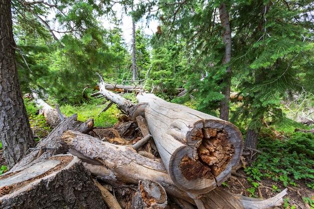 Pozostałości działalności człowieka w lesie.