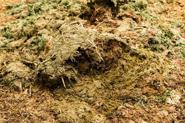 Pozostałości krowy świeże gówno na zielonej trawie