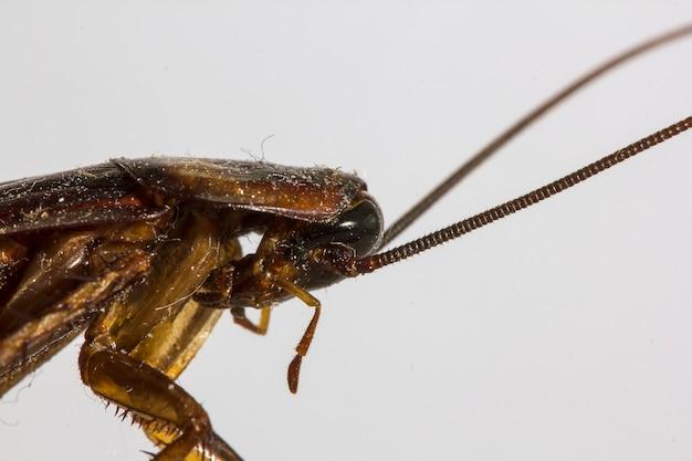 Pozostałości martwych karaluchów