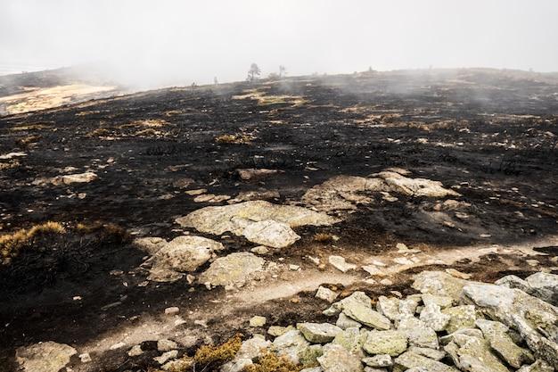 Pozostałości pożaru lasu ze spalonym zaroślem.