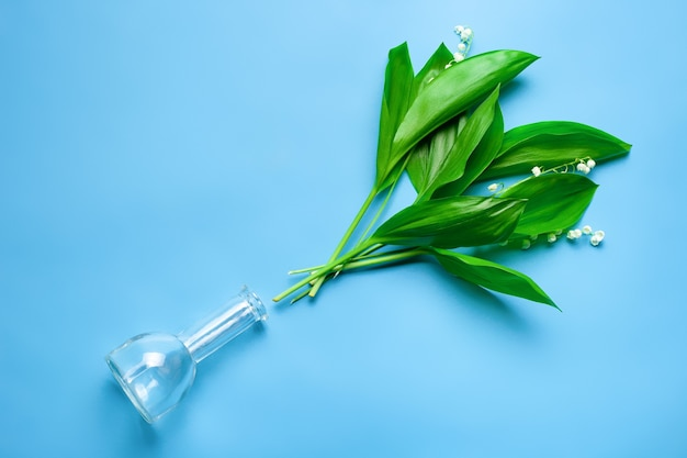 Pozostawia bukiet konwalii w pobliżu przezroczystego szklanego wazonu widok z góry z niebieskim na białym tle ...