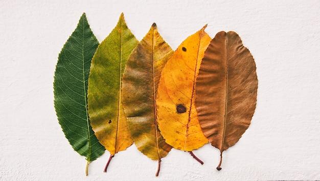 Pozostawia zmieniające się kolory, aby wskazać zmieniające się pory roku