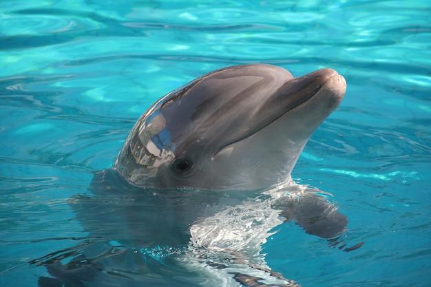 Pozy delfinów