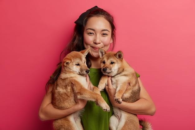 Pozytywnie wyglądająca młoda azjatka cieszy się towarzystwem dwóch ukochanych psów shiba inu. szczenięta rodowodowe z właścicielem, przewożone do przychodni weterynaryjnej. różowe tło.
