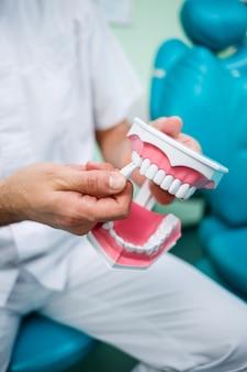 Pozytywny lekarz w białym mundurze pokazującym pozorowaną szczękę z zębami podczas siedzenia w gabinecie stomatologicznym