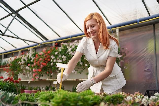 Pracownicy monitorują wzrost i rozwój sukulentów w szklarni