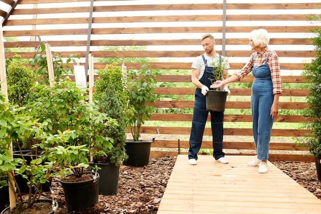 Pracownicy zakładający ogród