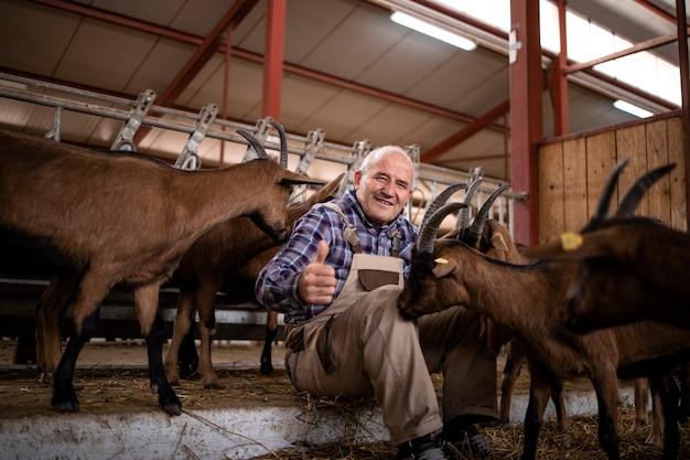 Pracownik farmy zajmujący się zwierzętami domowymi i bawiący się kozami w gospodarstwie.