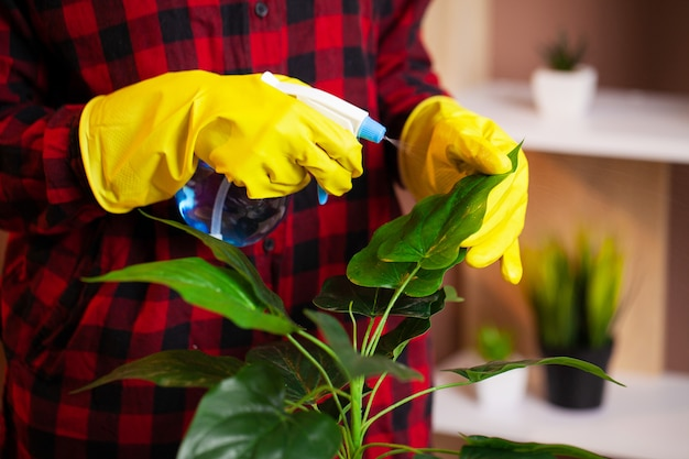 Pracownik firmy sprzątającej sprząta biuro i dba o rośliny