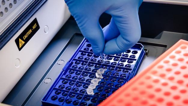 Pracownik laboratorium układający końcówki pipety w niebieskim pojemniku na badanie koronawirusa