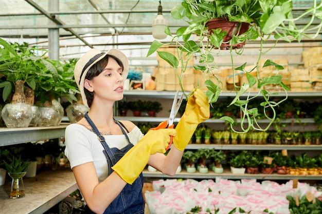 Pracownik szklarni rozbioru roślin