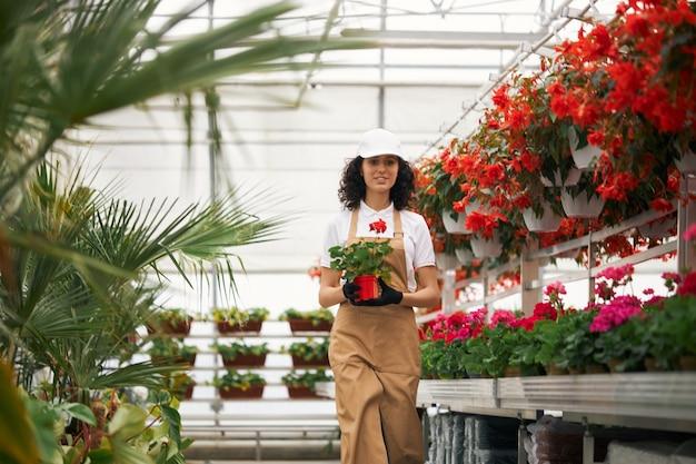 Pracownik szklarni w mundurze niosącym garnek z czerwonym kwiatem