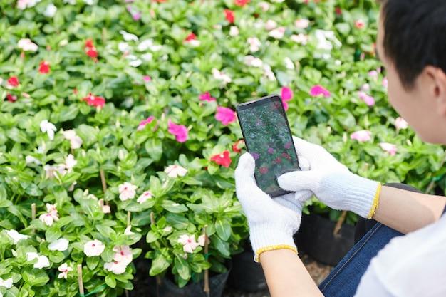 Pracownik targu kwiatowego w tekstylnych rękawiczkach robi zdjęcia kwitnących kwiatów, aby opublikować je w mediach społecznościowych lub wysłać do klienta