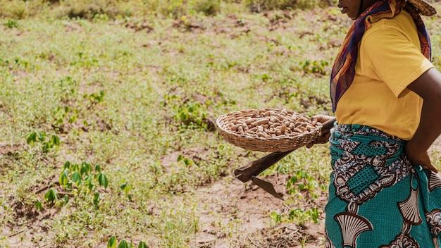 Pracownik wsi trzyma kosz z orzeszkami ziemnymi