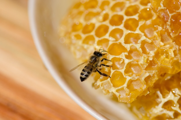 Pracujące pszczoły na komórkach miodu.