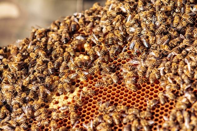 Pracujące pszczoły na strukturze plastra miodu