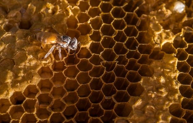 Pracujące pszczoły o strukturze plastra miodu ze słodkim miodem.
