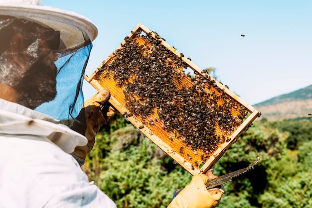 Pracujący pszczelarz zbiera miód