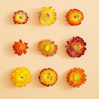 Prasowany i suszony biały delikatny przezroczysty kwiat, wyizolowany na białej powierzchni. do wykorzystania w scrapbookingu, florystyce prasowanej lub zielniku.