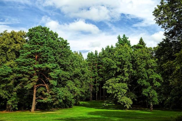 Prawdziwa natura z drzewami i trawą latem lub wiosną, piękna przyroda do oglądania