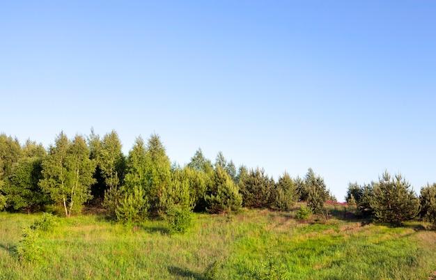 Prawdziwa przyroda z zielonymi drzewami i trawą oświetloną światłem słonecznym, prawdziwy odpoczynek i rozrywka na łonie natury, świeży odpoczynek i powietrze