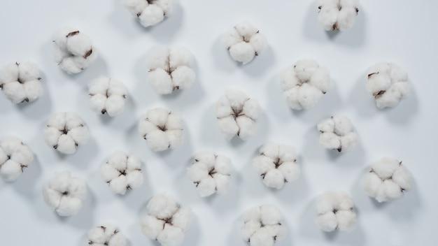 Prawdziwe białe kwiaty z bawełny organicznej w studio, które zostały sprowadzone z holandii, które reprezentują na