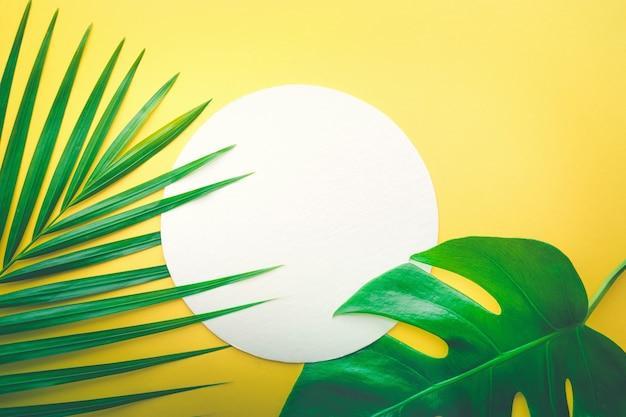 Prawdziwe liście z białym tłem przestrzeni. projekt koncepcje tropikalnej przyrody botanicznej.