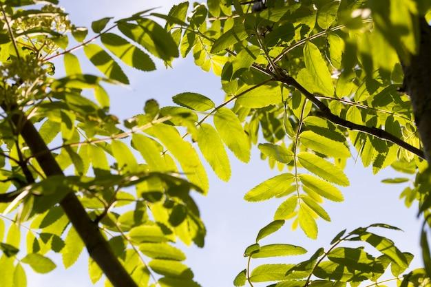 Prawdziwe różne gatunki drzew nasłonecznionych latem lub wiosną