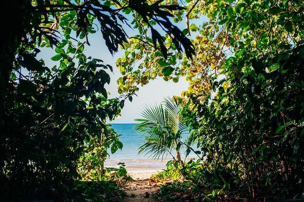 Prawdziwie piękny chodnik przez naturę. romantyczna ścieżka kończy się na plaży