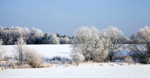 Prawdziwy krajobraz zimą w roku z jasnym, jasnym parkiem lub lasem, gdzie drzewa są zmarznięte, a gleba pokryta głębokim śniegiem