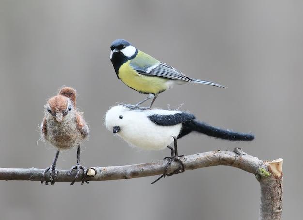 Prawdziwy ptak i wypchany ptak. sikora bogatka i nadziewany cycek długoogoniasty i strzyżyk