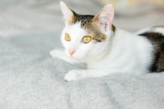 Pręgowany kot leży na szkockiej kracie, słodkiego kota