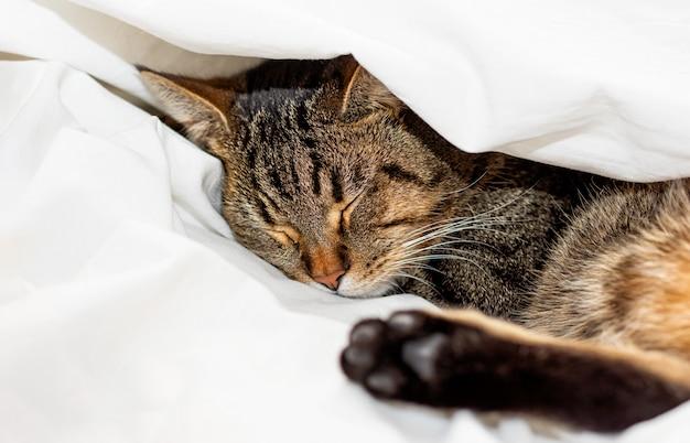 Pręgowany kot śpi na białej prześcieradle. selektywne ustawianie ostrości.